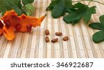 Small photo of Seeds momordika plant in the Cucurbitaceae family open achene with leaves