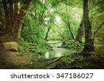 Magical Summer Swamp Deep In...