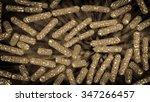 escherichia coli also known as... | Shutterstock . vector #347266457