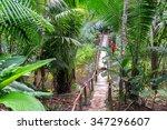 small wooden bridge in a lush... | Shutterstock . vector #347296607