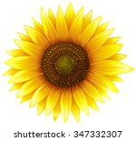 Close Up Sunflower With Fine...