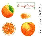 set orange. watercolor... | Shutterstock . vector #347461613