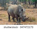 white rhinoceros or square... | Shutterstock . vector #347472173