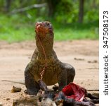komodo dragons eat their prey.... | Shutterstock . vector #347508173