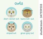 vector owls set  short eared...