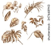 hand drawn branches and leaves... | Shutterstock .eps vector #347668943