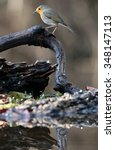 robin bird in nature | Shutterstock . vector #348147113