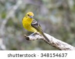 female flame colored tanager... | Shutterstock . vector #348154637