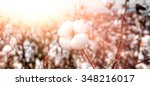 close up of ripe cotton bolls... | Shutterstock . vector #348216017