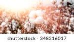 close up of ripe cotton bolls... | Shutterstock . vector #348216017