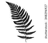 fern frond black silhouette....   Shutterstock . vector #348296927