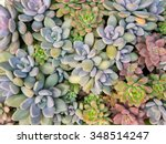 rectangular arrangement of... | Shutterstock . vector #348514247