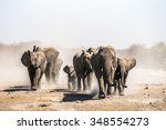 A Herd Of Elephants Approaches...