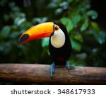 toucan on the branch in... | Shutterstock . vector #348617933