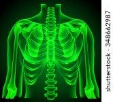 human anatomy  thorax  neon... | Shutterstock .eps vector #348662987