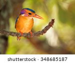 Smallest colorful orange and...