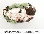sleeping puppy   Shutterstock . vector #348820793