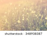 colorful flowers. it looks... | Shutterstock . vector #348938387