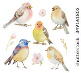 bird watercolor set. hand... | Shutterstock . vector #349161803