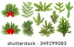 Set Of Evergreen Coniferous...
