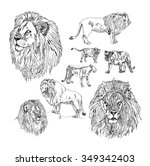 set of hand drawn lion.  | Shutterstock .eps vector #349342403