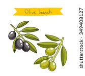 olive branches. vector... | Shutterstock .eps vector #349408127