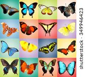 butterflies collection on... | Shutterstock . vector #349946423