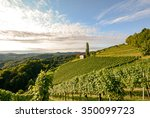 Landscape With Wine Grapes In...