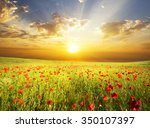 field with green grass and red... | Shutterstock . vector #350107397