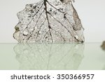 rotten leaves with fibers  ... | Shutterstock . vector #350366957