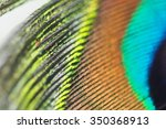 peacock feather with details | Shutterstock . vector #350368913