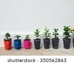 small plants in plastic cups | Shutterstock . vector #350562863