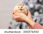 little white hedgehog on a girl'... | Shutterstock . vector #350576543