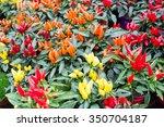 Different Chili Pepper Plants...