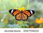 Stock photo orange butterfly on orange cosmos flowers 350754023