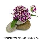 beautiful purple pansy flowers... | Shutterstock . vector #350832923