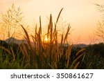 grass flower on sunset... | Shutterstock . vector #350861627