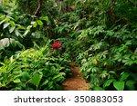 tropical garden  cairns ...   Shutterstock . vector #350883053