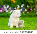 Stock photo white swiss shepherd s puppy and kitten sitting on green grass in front view 350900483