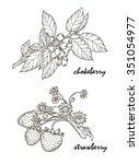 contour  design element  leaves ... | Shutterstock .eps vector #351054977