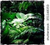 tropical garden   Shutterstock . vector #351168353