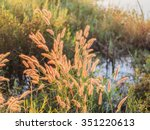 reed grass  on foggy morning | Shutterstock . vector #351220613