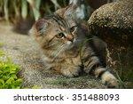 cat | Shutterstock . vector #351488093