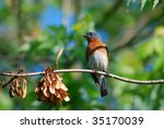 blue bird | Shutterstock . vector #35170039