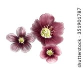 watercolor marsala flower | Shutterstock . vector #351901787