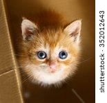 Blue Eyed Red Haired Kitten...