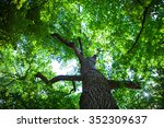 forest trees nature green wood... | Shutterstock . vector #352309637