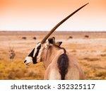 detailed view of gemsbok...   Shutterstock . vector #352325117