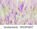 lavender | Shutterstock . vector #352391837