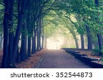 beautiful avenue in to the park | Shutterstock . vector #352544873
